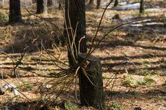 Загадочное и волшебное дерево Стоковое Изображение