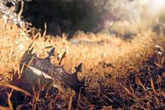 загадочное и волшебное фото кроны короля над камнем в ландшафте древесин или поля Англии со светлым пирофакелом средневеково стоковое изображение