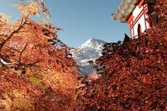 загадочное сада вишни шаржа цветений японское Стоковые Фото