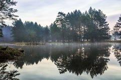 Загадочное утреннее время в лесе Стоковая Фотография
