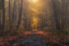 Загадочный лес на вечере после дождя Рисуночный ландшафт осени Стоковые Изображения RF