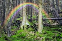 Загадочный одичалый лес Стоковое Изображение RF