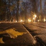 Загадочный парк, Киев стоковые фото