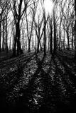 Загадочный темный старый лес в тумане, черно-белом Стоковая Фотография