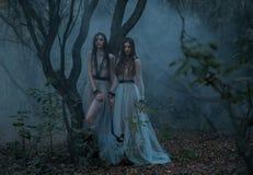 Загадочная дама с длинной прогулкой черных волос в пугающих древесинах Стоковое фото RF