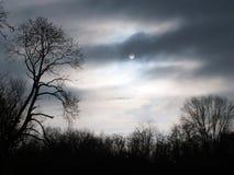 Загадочная ноча леса в лесе Стоковая Фотография