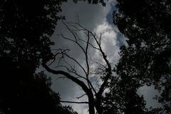 Загадочная природа Стоковое Изображение