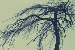 Загадочное дерево, страшный лес Стоковое Изображение