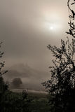 Загадочное туманное утро Стоковые Изображения