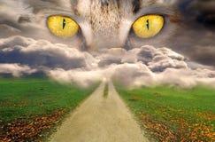 Загадочные глаза Стоковая Фотография