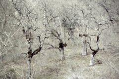 Загадочный и страшный лес Стоковое Фото