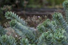 Загадочный каменный цветок Стоковое фото RF