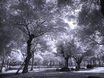 загадочный парк Стоковое Фото