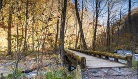 Загадочный поток Oirase пропуская через лес осени внутри к Стоковые Изображения RF