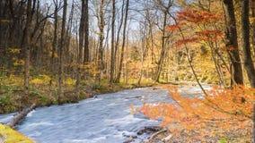 Загадочный поток Oirase пропуская через лес осени внутри к Стоковое Фото