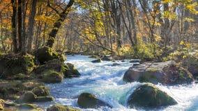Загадочный поток Oirase пропуская через лес осени внутри к Стоковое Изображение RF