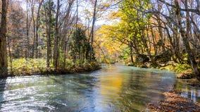 Загадочный поток Oirase пропуская через лес осени внутри к Стоковая Фотография