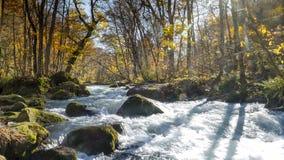 Загадочный поток Oirase пропуская через лес осени внутри к Стоковое фото RF