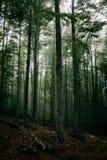 Загадочный темный лес в тумане Стоковые Изображения