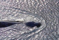 Загерметизируйте заплывание на фантастически, который струят поверхности моря Стоковое Изображение