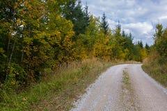Загиб в идя пути в лесе во время осени, кривой на пешем туризме Стоковые Фотографии RF