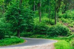 Загиб на дороге в лесе Стоковые Изображения RF