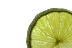 загонянный в угол зеленый цвет Стоковое Изображение