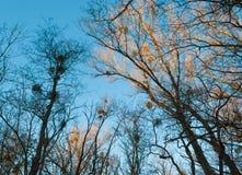 Загоранные деревья Стоковое Изображение