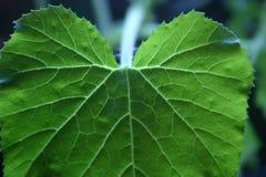 загоранные листья Стоковая Фотография