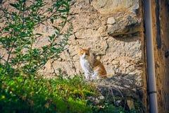 Загорать довольно коричневого и белого кота сидя в саде старого дома стоковая фотография rf