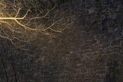 Загоренная ветвь дерева Стоковое Изображение