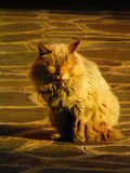 Загоренная домашняя кошка Стоковые Фото