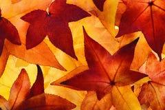 Загоренные листья осени с накаляя цветами Стоковые Фото