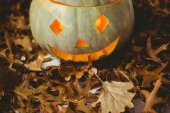 Загоренные фонарики jack o с листьями осени Стоковые Изображения