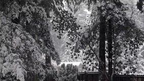 Загородка и сад полиняли с лесом покрытым снегом видеоматериал