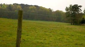 Загородка колючей проволоки на предпосылке поля и леса видеоматериал