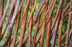 Загородка от wooven ветви вербы Стоковые Фотографии RF