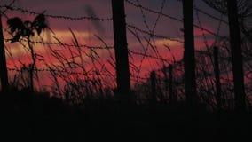 Загородка с колючей проволокой и травой на предпосылке пасмурного красно-голубого неба акции видеоматериалы