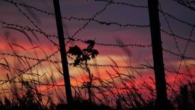 Загородка с колючей проволокой и травой на предпосылке пасмурного красно-голубого неба видеоматериал