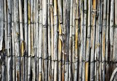 Загородка с травой тросточки Стоковые Фото