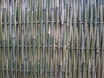 Загородка текстуры бамбука Стоковое фото RF