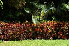 загородка цвета Стоковые Изображения