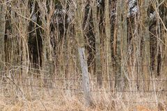 Загородка Barewire перед лесом стоковая фотография rf