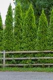 Загородка Thuja стоковая фотография rf