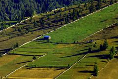 Загородки и деревья в зеленых лугах стоковое фото