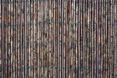 Загородка вербы Стоковое фото RF