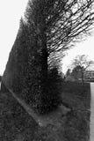 Загородка дерева и куста, королевский ботанический сад, Эдинбург, Шотландия Стоковое фото RF