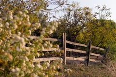 Загородка захода солнца весны Стоковое Изображение RF