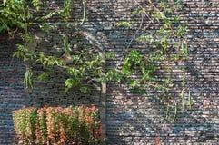 Загородка зеленых заводов космоса, каменных и взбираться Стоковые Изображения RF