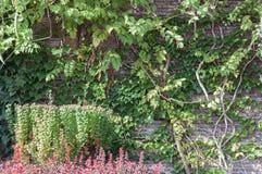 Загородка зеленых заводов космоса, каменных и взбираться Стоковое Изображение